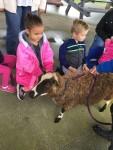 CA Petting Zoo 3