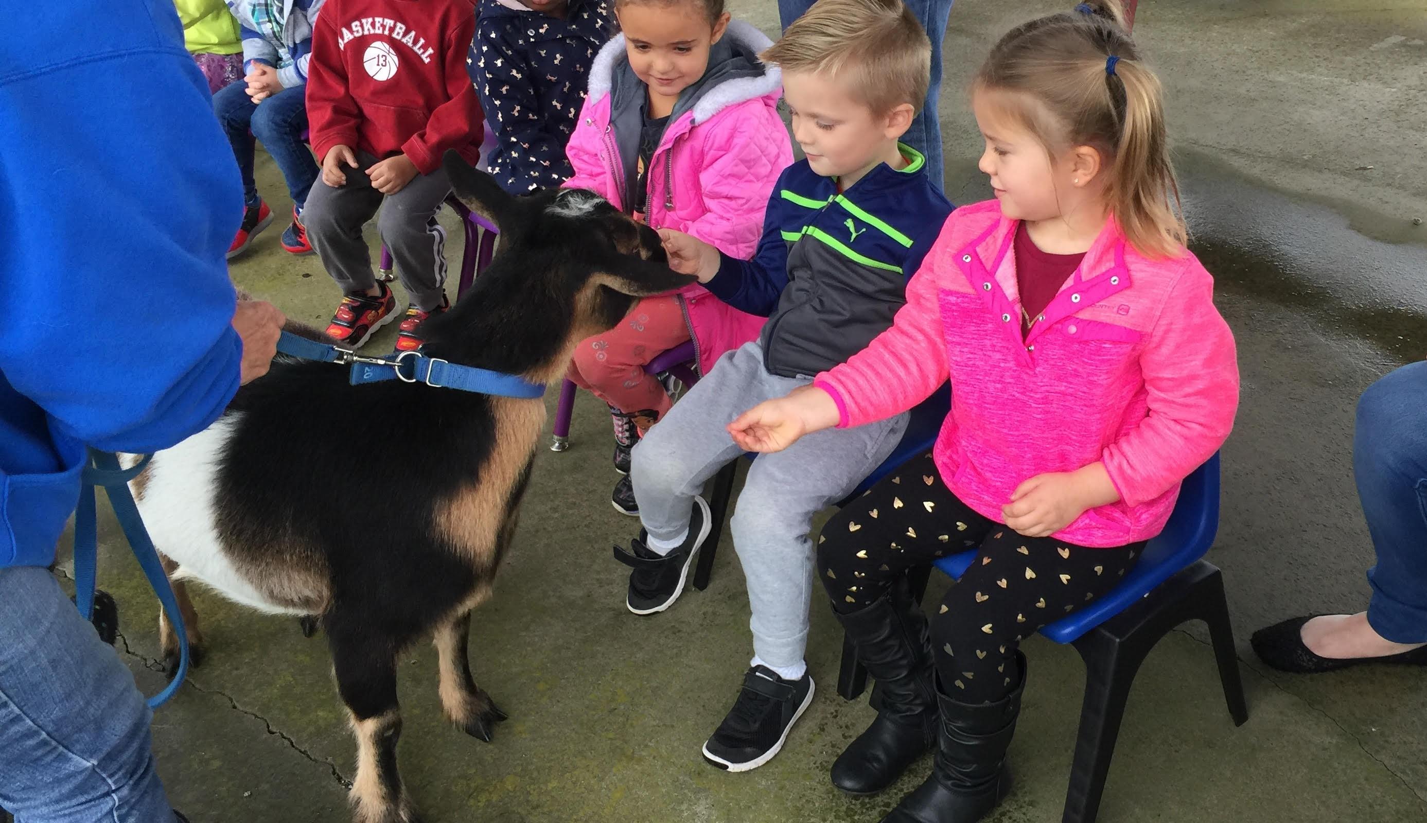 CA Petting Zoo 4