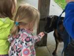 CA Petting Zoo 5
