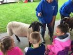 CA Petting Zoo 7