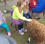 CA Petting Zoo 9